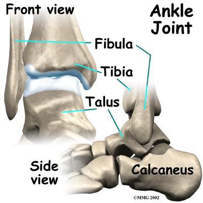 ankle_osteoarthritis_anatomy01